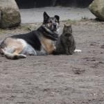 hund-und-katz2