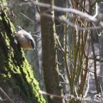 waldvogel1