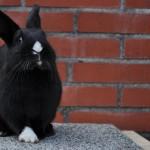 kaninchen-im-aussengehege3